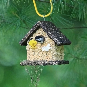 edible-bird-houses (70)