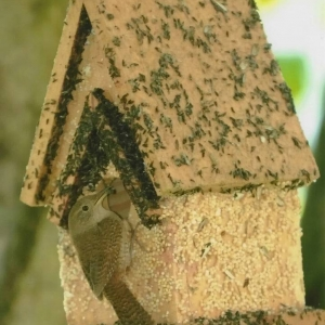 edible-bird-houses (74)