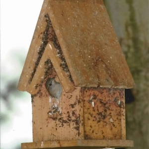 edible-bird-houses (78)