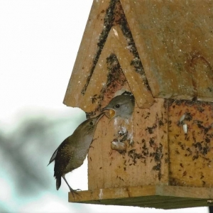 edible-bird-houses (72)