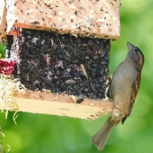 edible-bird-houses (73)
