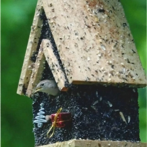 edible-bird-houses (80)