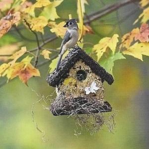 edible-bird-houses (71)