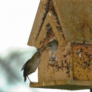 edible-bird-houses (72)