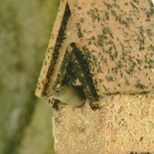 edible-bird-houses (75)