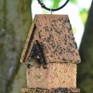 edible-bird-houses (76)