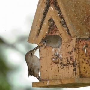 edible-bird-houses (77)