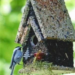 edible-bird-houses (79)